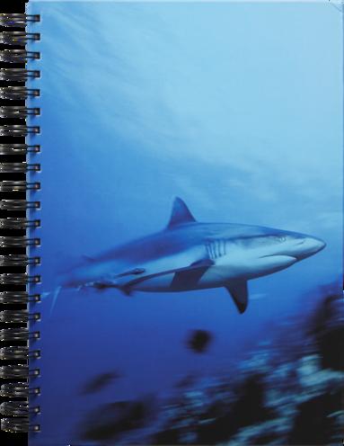 Anteckningsbok A4 linjerad Mattias A. Klum haj