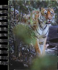 Anteckningsbok A6 linjerad Mattias A. Klum tiger
