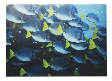 Print 70x50 Mattias A. Klum fiskar