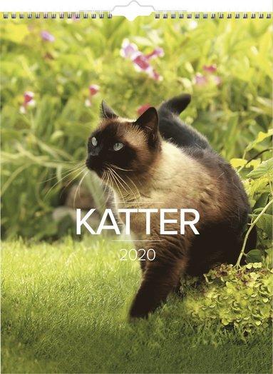 Väggkalender 2020 Stora Kattkalendern 1