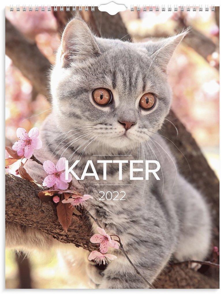 Väggkalender 2022 Stora Kattkalendern 1