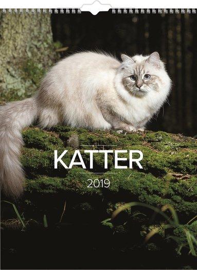 Väggkalender 2019 Stora Kattkalendern 1