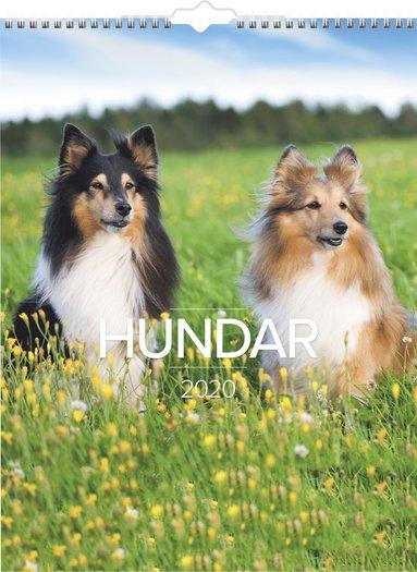 Väggkalender 2020 Stora Hundkalendern 1