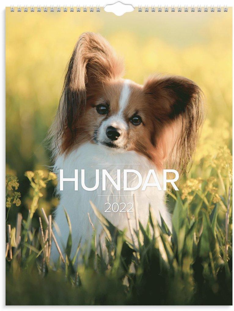 Väggkalender 2022 Stora Hundkalendern 1