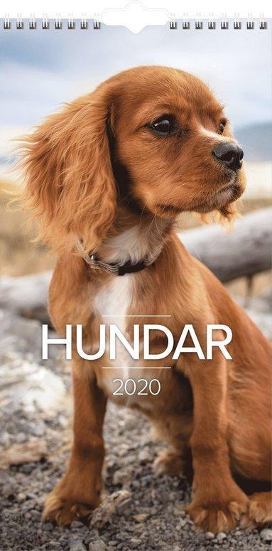 Väggkalender 2020 Liten Hundkalender 1
