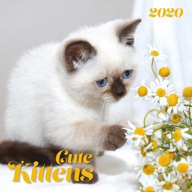 Väggkalender 2020 30x30cm Cute Kittens 1