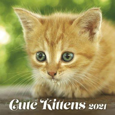 Väggkalender 2021 Cute Kittens 1