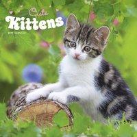 Väggkalender 2019 Cute Kittens