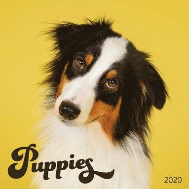 Väggkalender 2020 30x30cm Puppies 1