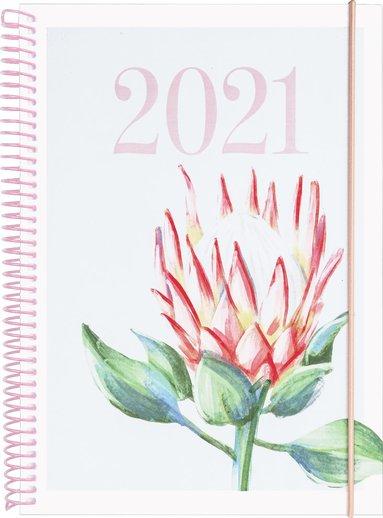 Kalender 2021 Senator A6 Legend Protea 1
