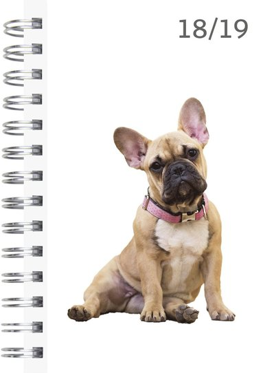 Kalender 18-19 Compact Pets