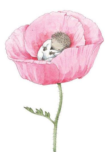 Kort Lilla Kotten i ros
