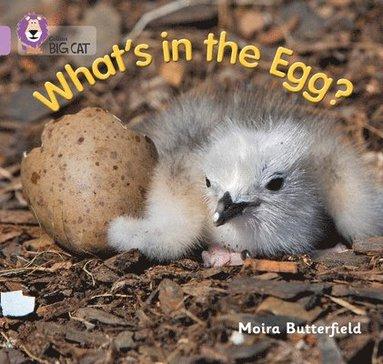 bokomslag What's in the Egg?