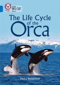 bokomslag The Life Cycle of the Orca