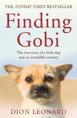 bokomslag Finding Gobi (Main edition)