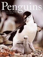 bokomslag Penguins