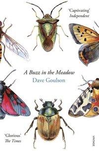 bokomslag A Buzz in the Meadow