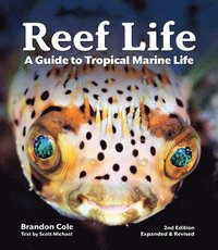 bokomslag Reef Life