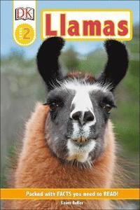 bokomslag Llamas
