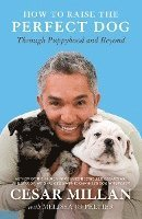 bokomslag How to Raise the Perfect Dog: Through Puppyhood and Beyond