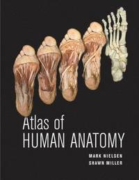 bokomslag Atlas of Human Anatomy