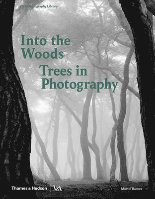 bokomslag Into the Woods : Trees in Photography