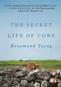 bokomslag The Secret Life of Cows