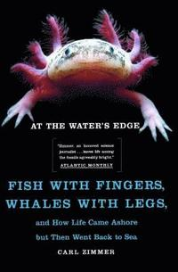 bokomslag At the Water's Edge: Fish with Fingers, Whales with Legs, and How Life Came Ashore But Then Went Back to Sea