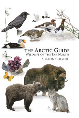 bokomslag Arctic guide - wildlife of the far north