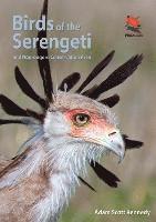 bokomslag Birds of the Serengeti
