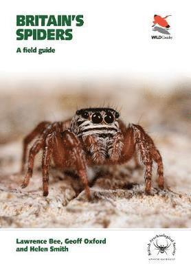 bokomslag Britain's Spiders
