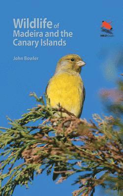bokomslag Wildlife of Madeira and the Canary Islands: A Photographic Field Guide to Birds, Mammals, Reptiles, Amphibians, Butterflies and Dragonflies