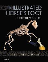 bokomslag The Illustrated Horse's Foot