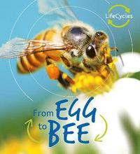 bokomslag Lifecycles: Egg to Bee