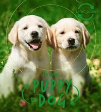bokomslag Lifecycles - Pup To Dog