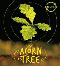 bokomslag Lifecycles - Acorn to Tree
