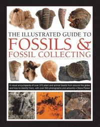 bokomslag Fossils &; Fossil Collecting, The Illustrated Guide to