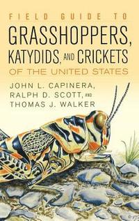 bokomslag Field Guide to Grasshoppers, Katydids, and Crickets of the United States