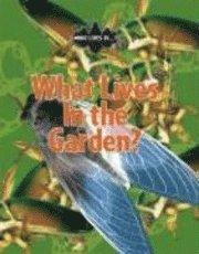 bokomslag What Lives in the Garden?
