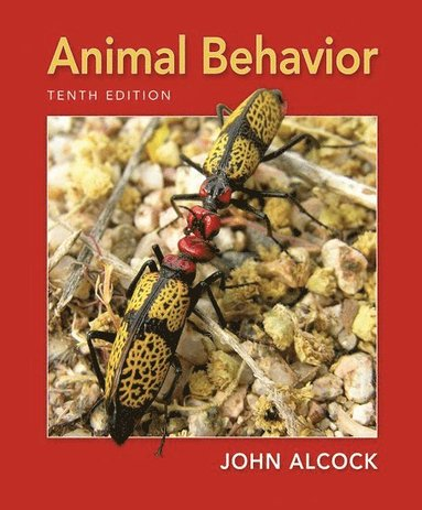 bokomslag Animal Behavior: An Evolutionary Approach