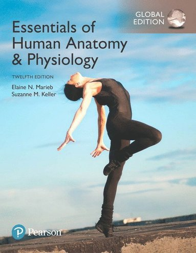 bokomslag Essentials of Human Anatomy & Physiology, Global Edition