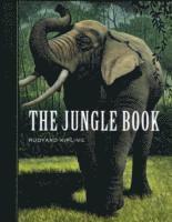 bokomslag Jungle book