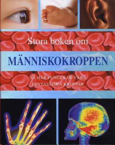bokomslag Stora boken om människokroppen : så här fungerar våra fantastiska kroppar