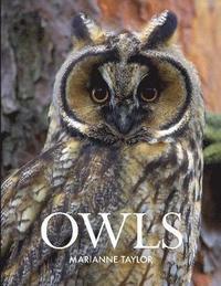 bokomslag Owls