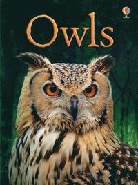 bokomslag BEG Owls