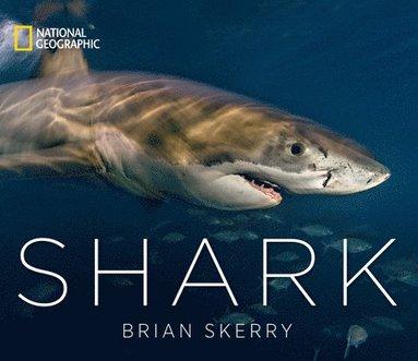 bokomslag Shark