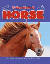 bokomslag If You Were a Horse