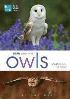 bokomslag RSPB Spotlight Owls