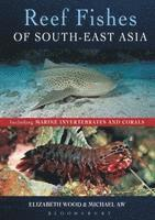bokomslag Reef Fishes of South-East Asia