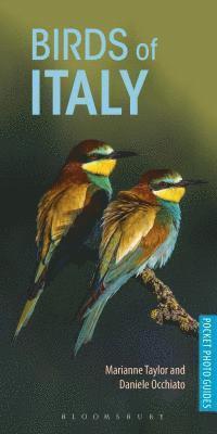 bokomslag Birds of Italy